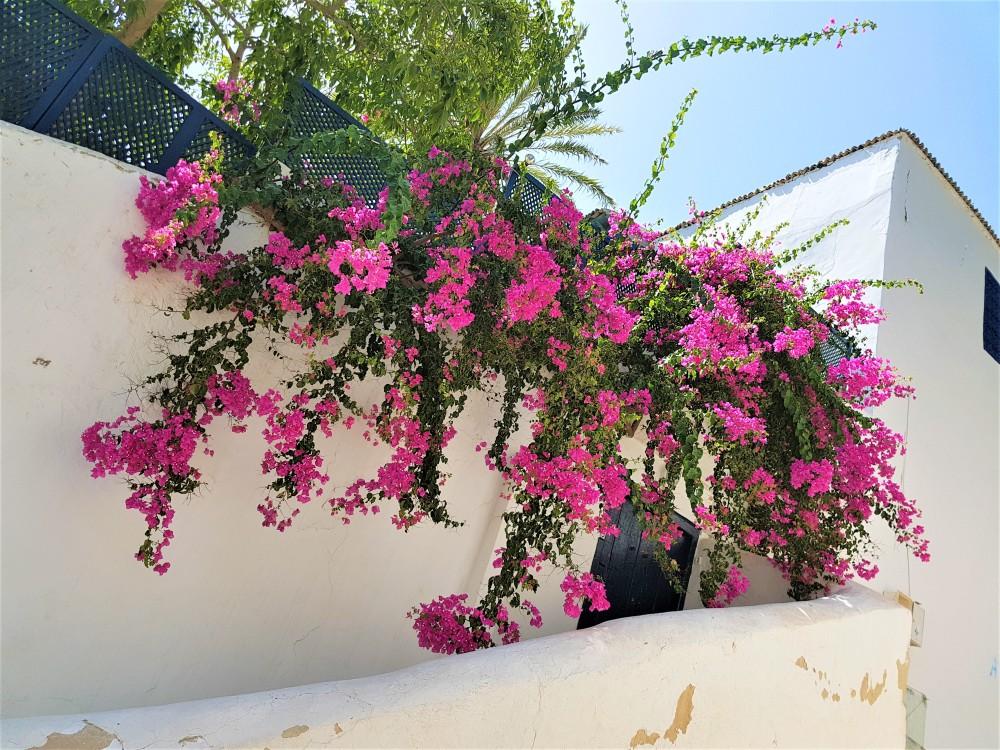 fleurs-sidibousaid
